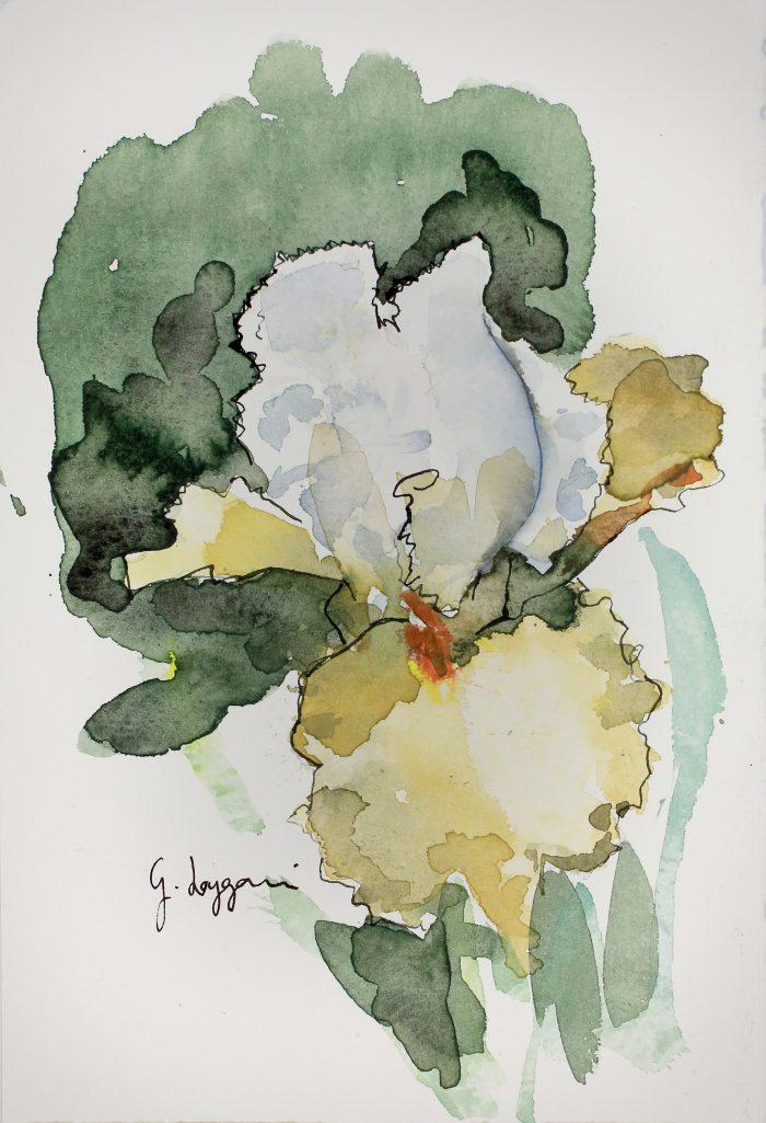 Iris 'Chateau d'Auvers sur Oise'