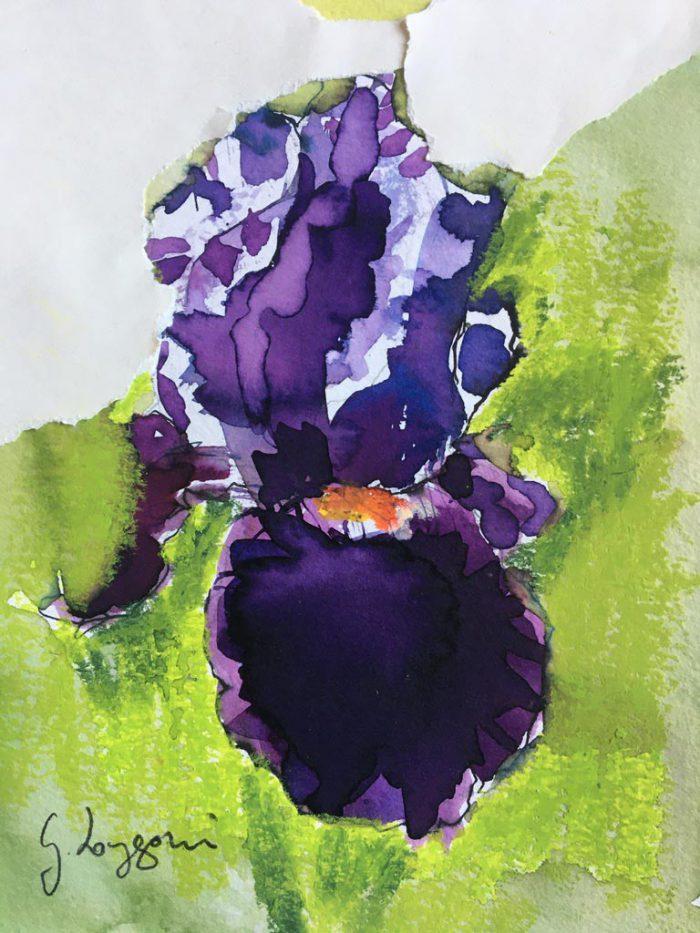 Iris ' Fiery Temper'