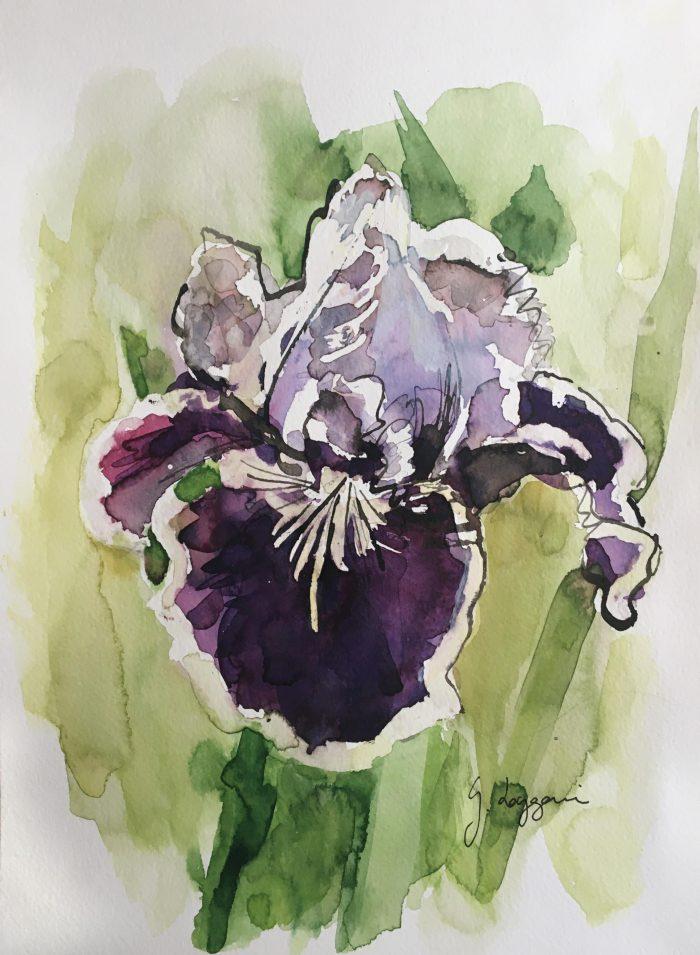Iris 'Puddy Tat'
