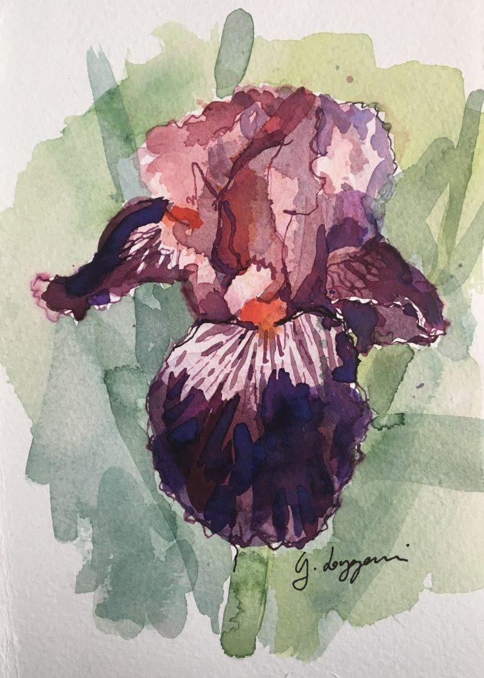 Iris 'Wench'